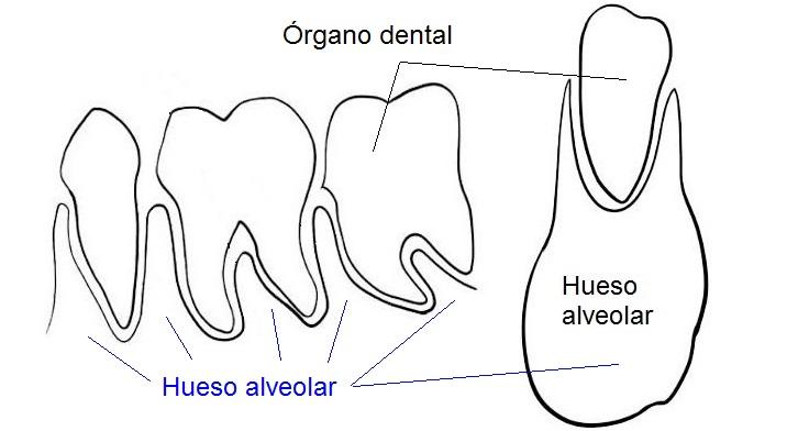 hueso-alveolar-hr-dental-